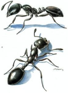 داستان مورچه و سلیمان نبی ع